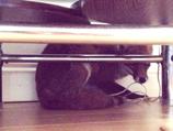 Fox found under living room sofa