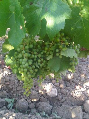 Bordeaux IMG00304-20110624-1832