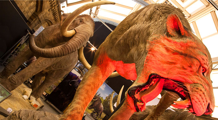 Mammoths, Natural History Museum @ Natural History Museum  | London | United Kingdom